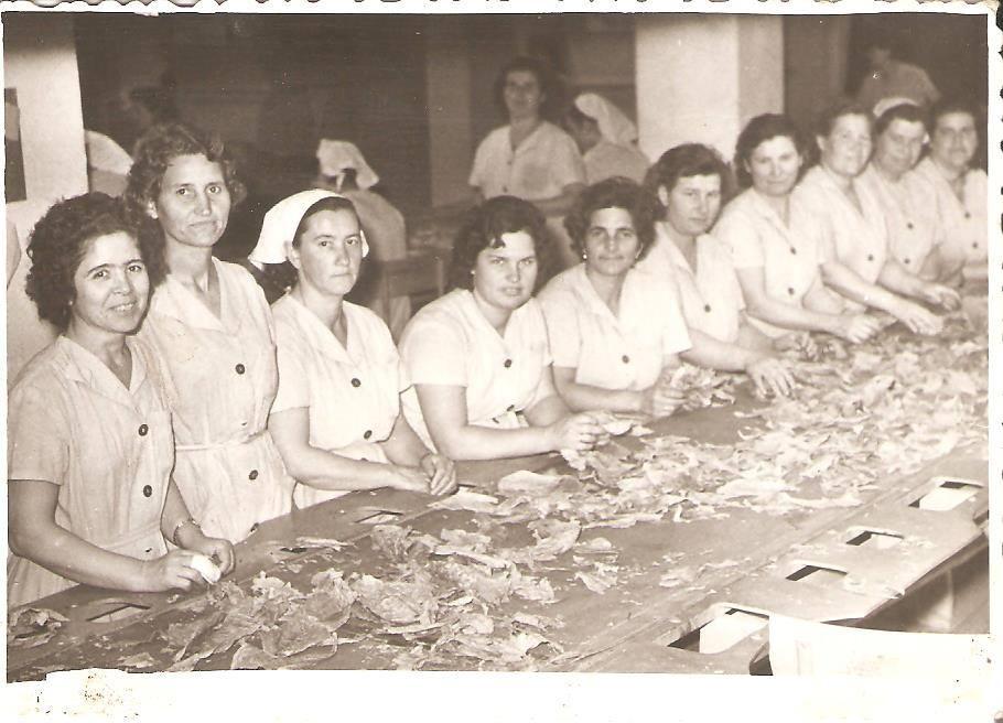 Сортиране на тютюна в Тютюневия комбинат, архив: Стойчо Тосков